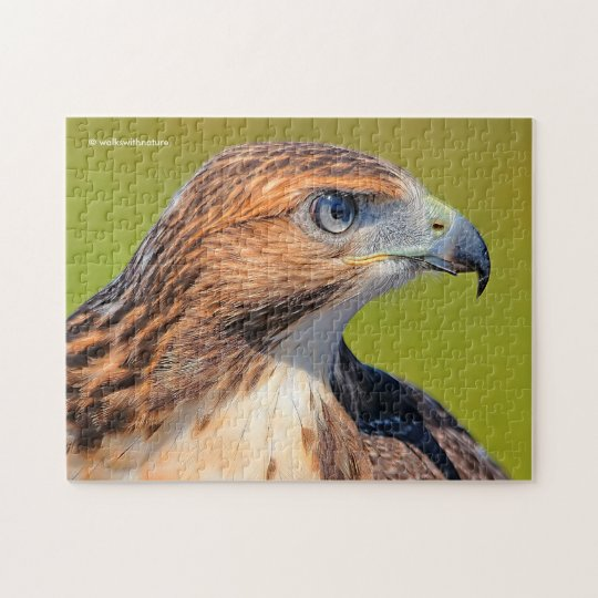 Beautiful Young Red-Tailed Hawk Jigsaw Puzzle