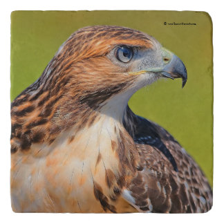 Beautiful Young Red-Tailed Hawk Trivet