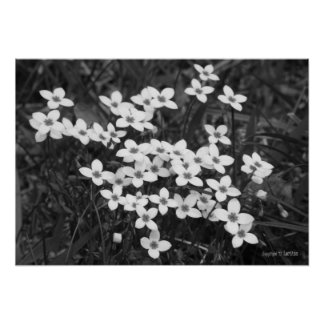 Beauty in Small Packages (B&W) Poster