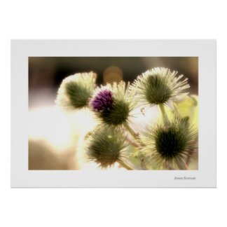 Beauty of a weed 5 print