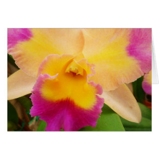 Beauty Of An Orchid Card