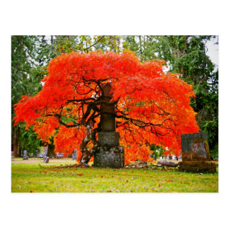 Beauty of Autumn Postcard