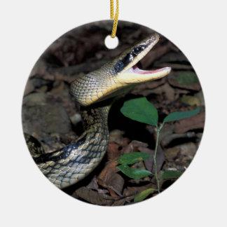 Beauty rat snake round ceramic decoration