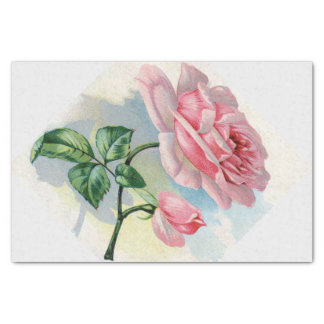 Beauty Rose Pink on Gray Tissue Paper