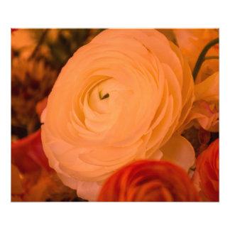 Beauty Surrounds 24x20 Kodak  Photo Paper (Satin)