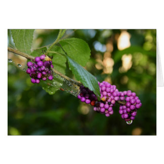 Beautyberry - Verbena Berry with Dew Greeting Card