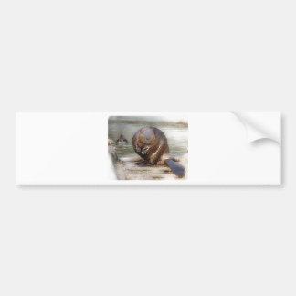 beaver bumper sticker