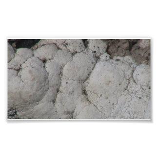 Beaver Dam Slough Geology Rock Earth History Stone Photo Print