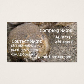 Beaver Design Business Card