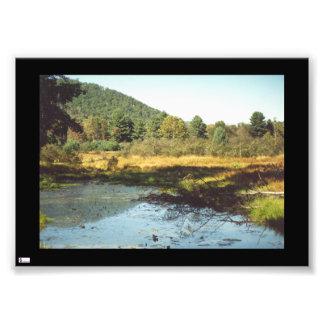 Beaver Pond Photo Print