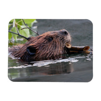 beaver rectangular photo magnet