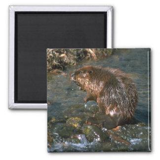 Beaver Square Magnet