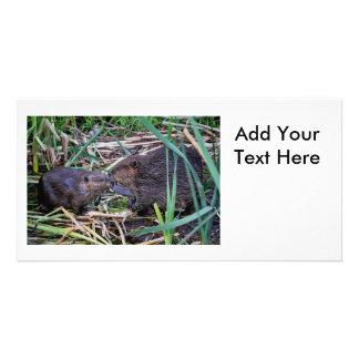 Beavers Kissing Photo Photo Greeting Card