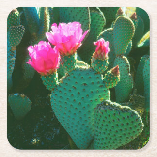 Beavertail Cactus Flowers Square Paper Coaster