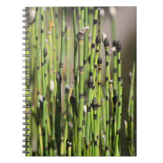 Becomes green thought notebooks
