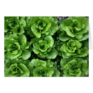 Bed of lettuce card