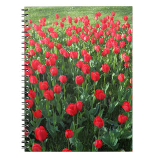 Bed of Red Tulips 01 Notebook