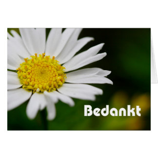 Bedankt- thank you in Dutch white daisy Card