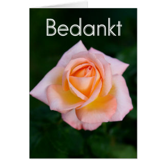 Bedankt - thank you in Dutch with orange rose Card