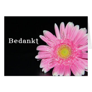 Bedankt, thank you in Dutch with Pink Daisy flower Card