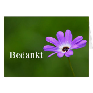 Bedankt - Thank you in Dutch with purple daisy Card