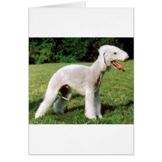 Bedlington Terrier Dog Card
