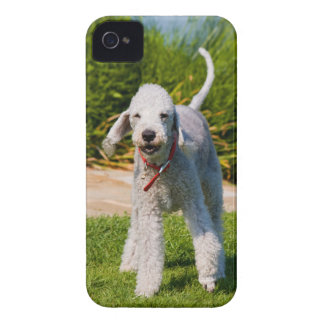 Bedlington Terrier dog cute beautiful photo Case-Mate iPhone 4 Case