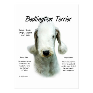 Bedlington Terrier History Design Postcard