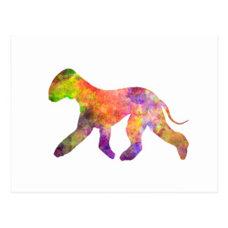Bedlington Terrier in watercolor 2 Postcard