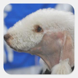 Bedlington Terrier  Stickers