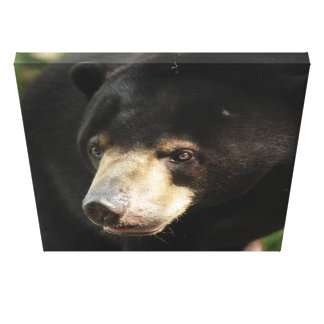 Bedu Gallery Wrapped Canvas