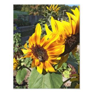 Bee a Sunflower Photo Print