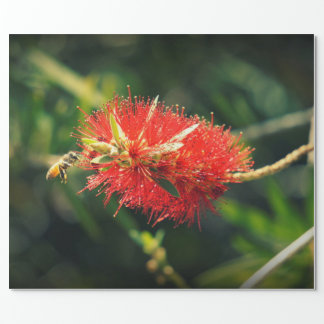Bee and a Bottlebrush Wrapping Paper