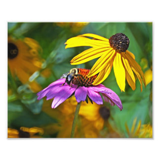Bee and Blossoms Photographic Print