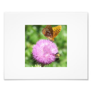 Bee and Butterfly on wild Thistle Photographic Print
