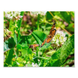 Bee and Butterfly Photo Print