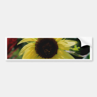 Bee and Flower Cards Bumper Stickers
