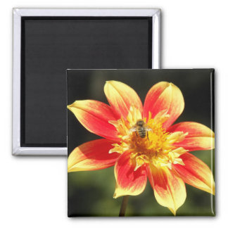 Bee and Orange Dahlia Floral Magnet