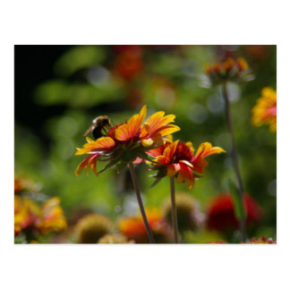 Bee and Red Orange Flowers postcard