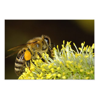 Bee at Work Photograph