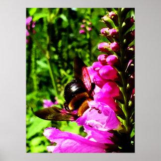 Bee Butt Poster
