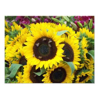 Bee Dance on a Sunflower Day Photo Print