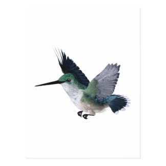 Bee Hummingbird Female Postcard