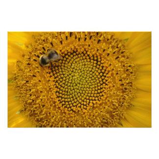 Bee in sunflower photo print