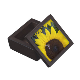 Bee in Sunflower Premium Gift Box