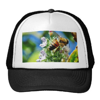 Bee Insect Cap