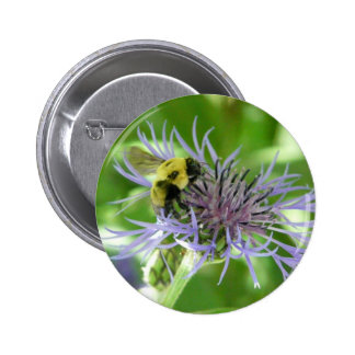 bee on a batchelor button