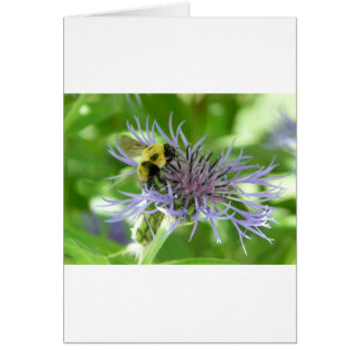 bee on a batchelor button cards