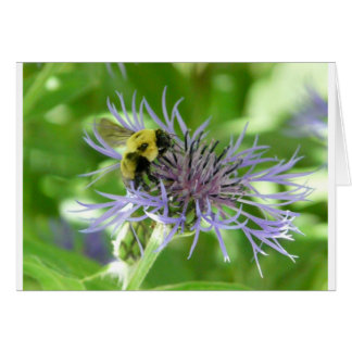 bee,on a batchelor button greeting card