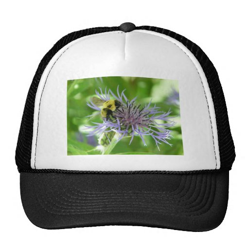 bee,on a batchelor button mesh hat